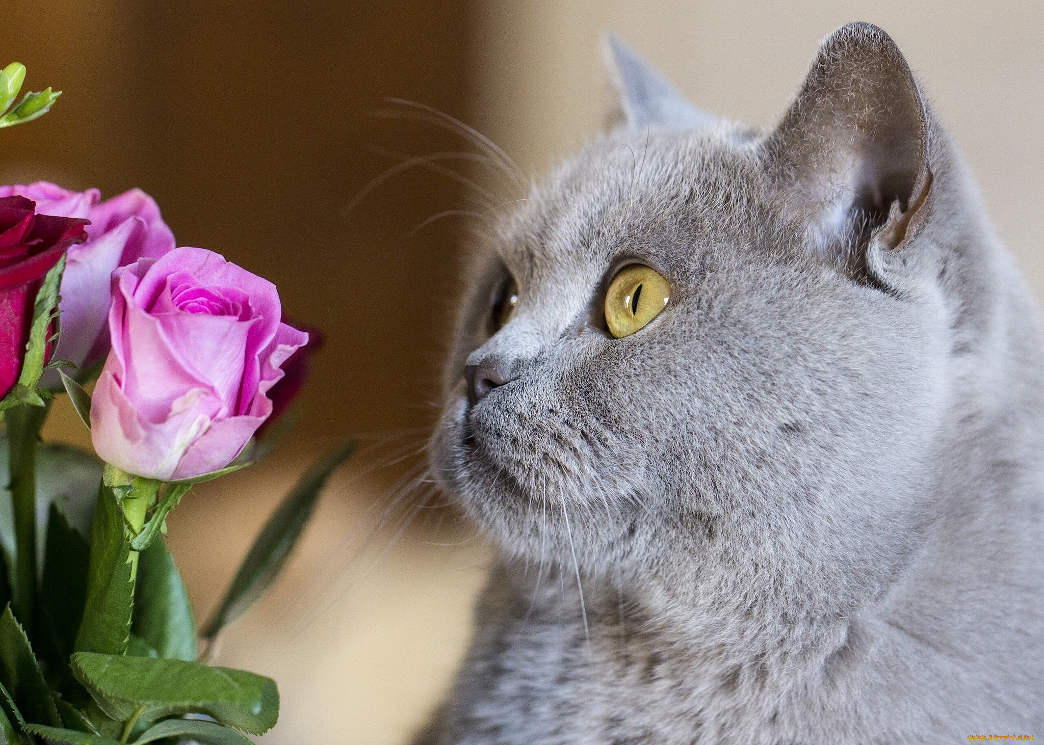 Картинки на рабочий стол кошки с цветами